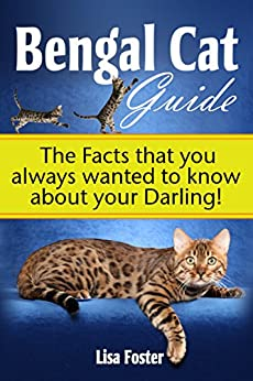 Bengal Cats For Sale: The Ultimate Guide to Best Bengal ...