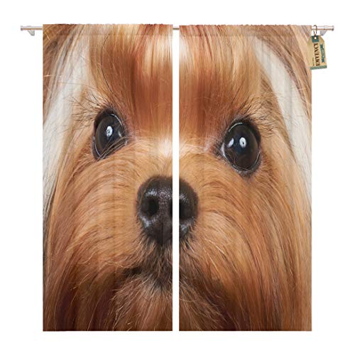Golee Window Curtain Brown Portrait of The Beautiful Yorkshire Terrier Long Eyelashes Home Decor Rod Pocket Drapes 2 Panels Curtain 104 x 96 inches ()