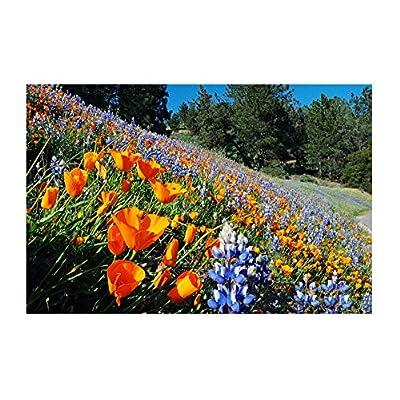 California Native Mixed Wildflowers - 13 Choice Varieties of California Natives .2 Oz. : Garden & Outdoor
