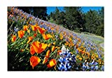 Search : California Native Mixed Wildflowers - 13 Varieties of California Natives .5 Oz.