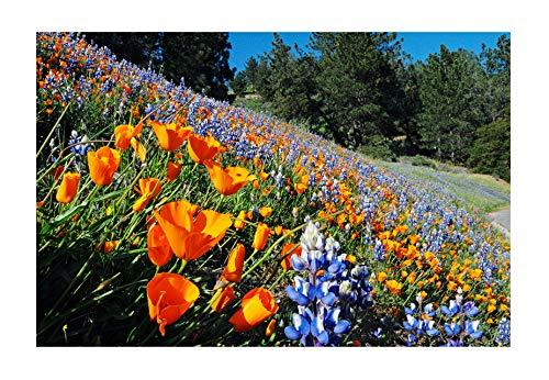 California Native Mixed Wildflowers - 13 Varieties of California Natives .5 Oz.