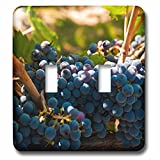 3dRose LSP_260510_2 USA, Washington, Red Mountain. Petit Verdot Grapes in a Vineyard Toggle Switch,
