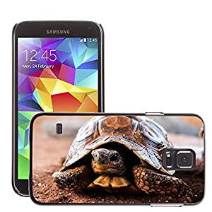 Etui Housse Coque de Protection Cover Rigide pour // M00307109 Tortuga Naturaleza lenta casco Animal // Samsung Galaxy S5 S V SV i9600 (Not Fits S5 ACTIVE)