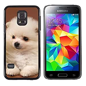 TopCaseStore / la caja del caucho duro de la cubierta de protección de la piel - White Puppy Japanese Spitz Volpino Italiano - Samsung Galaxy S5 Mini, SM-G800, NOT S5 REGULAR!