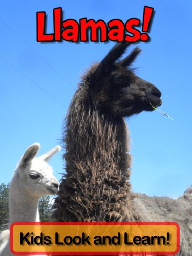 Llamas! Learn About Llamas and Enjoy Colorful Pictures - Look and Learn! (50+ Photos of Llamas)