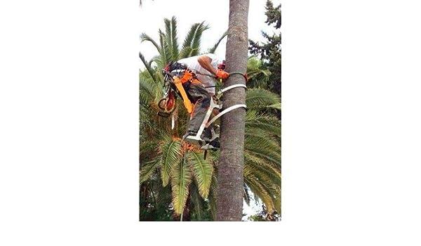 Bicicleta Poda Palmera con Flejes de 2,7/3,2/4,2 Aluminio (Flejes ...