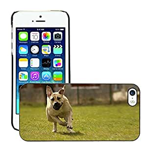 Hot Style Cell Phone PC Hard Case Cover // M00114839 Boerboel Dog Peanut Bulldog Ballotade // Apple iPhone 5 5S 5G