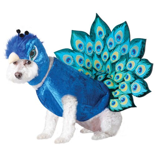 Animal Planet Peacock Dog Costume, Small, Multicolor, My Pet Supplies