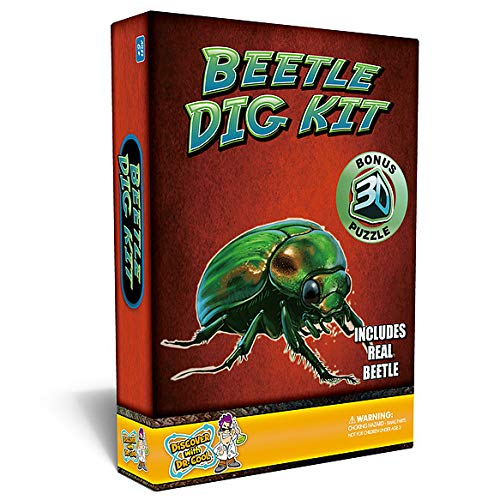 Beetle Puzzle Dig Kit -Excavate A Real Preserved - Kit Robot Beetle