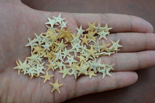 90-pcs-small-starfish-star-sea-shell-beach-craft-1-2