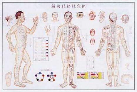 Amazon | 鍼灸経絡経穴図 ポスター | はり・きゅう倶楽部 | 鍼・灸
