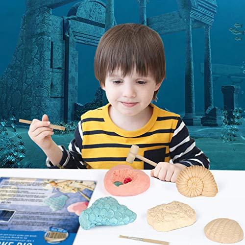 KARAZZO 5 in 1 Ocean Adventure Dig Kit,Real Ocean Pearl Gem Mining Kit Archaeological Excavation Educational Toys for Kids Over 6+ Years