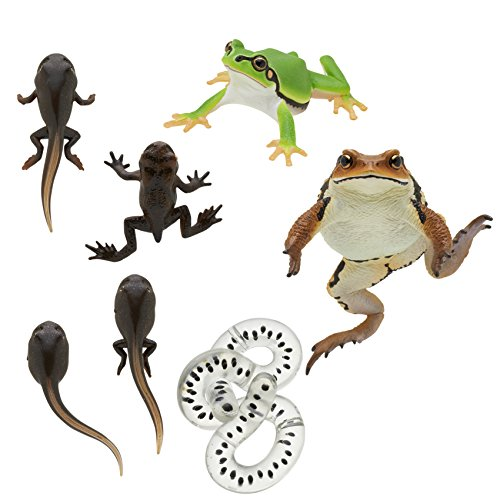 Kitan Club Frog and Toad Rubber Toys - Includes All 5 Collectable Figurines - Fun and Educational - Authentic Japanese Design ()