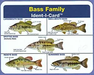 Bass family ident i card freshwater fish for Illinois fish species