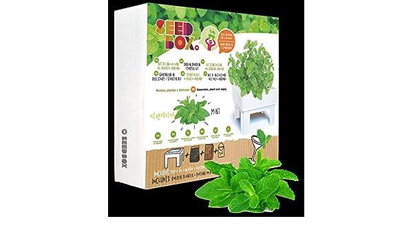 Huerto urbano ecológico hierbabuena (Kit regalo de iniciación al ...