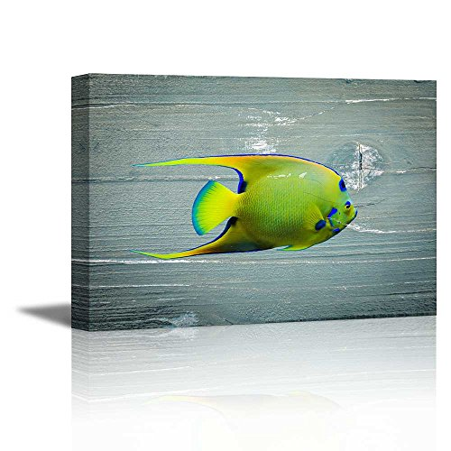 Tropical Fish on Vintage Wood Background Rustic ation