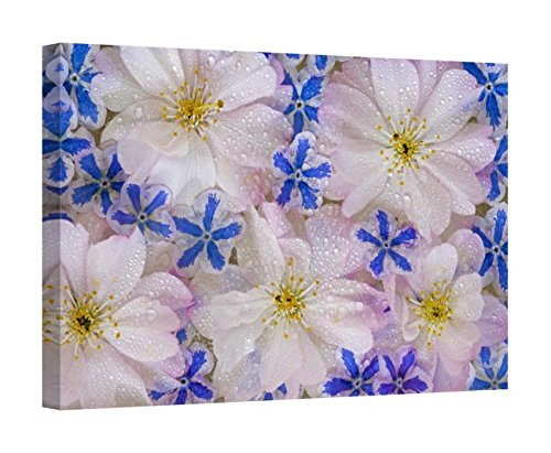 Easy Art Prints Jaynes Gallery's 'Montage of Cherry Blossoms and Blue Flowers with Dew' Premium Canvas Art 16 x 24