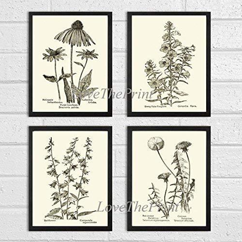 Botanical Print Set of 4 Prints Unframed Antique Coneflower Echinacea Foxglove Bellflower Dandelion Home Room Decor Wall Art MFS ()