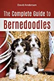 The Complete Guide to Bernedoodles: Everything you