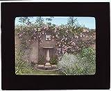 1914 Photo %22Gray Gardens%2C%22 Robert