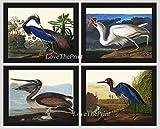 good will hunting edited - Bird Print Set of 4 Art Beautiful James Audubon Birds Louisiana Heron Great White Heron Pelican Blue Crane Illustration Home Room Decor Wall Art Unframed GJ