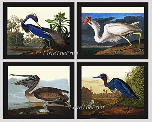 Pelican Wall (Bird Print Set of 4 Art Beautiful James Audubon Birds Louisiana Heron Great White Heron Pelican Blue Crane Illustration Home Room Decor Wall Art Unframed GJ)