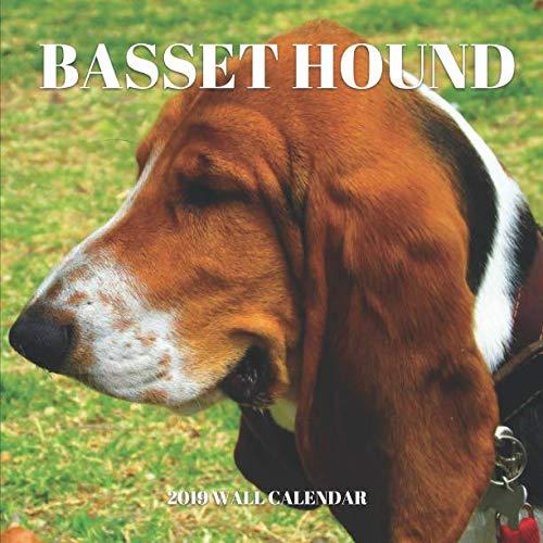 Basset Hound 2019 Wall Calendar: Mini Wall Calendar Dog Photography 12 Month Calendar Planner