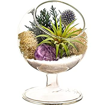Bliss Gardens Air Plant Terrarium Kit - 4
