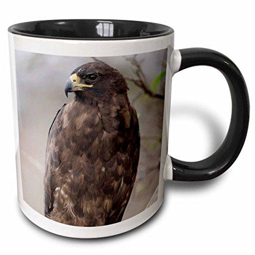 (3dRose 86439_4 Islands NP, Isabella, Galapagos Hawk-SA07 PSO0091-Paul Souders Ceramic Mug 11 oz Black/White )
