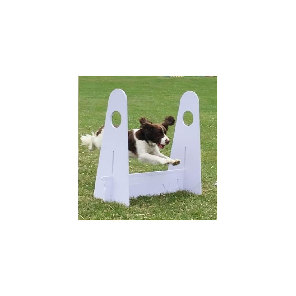 FlyBall Jumps With Dog Jumping