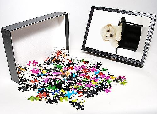 Photo Jigsaw Puzzle of JD-20643 Dog. White teddy bear puppy sitting in a top hat with a magic wand