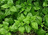 New Zealand Spinach (Warrigal Greens) Heirloom Garden Greens Vegetable Seeds 30