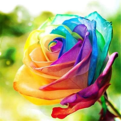 RoseBlue byRisa Egrow 200Pcs Rainbow Rose Seeds Rare Colorful Flower Potted Plant Garden Bonsai