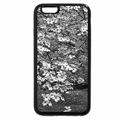 iPhone 6S Case, iPhone 6 Case (Black & White) - Dogwoods in Bloom