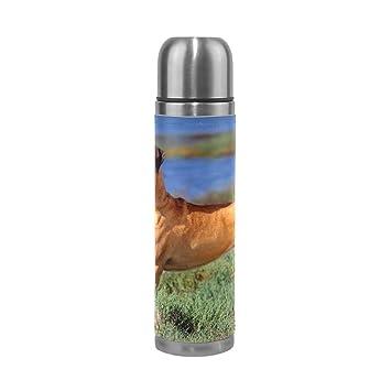 Amazon.com: Thermos - Botella de agua de acero inoxidable ...