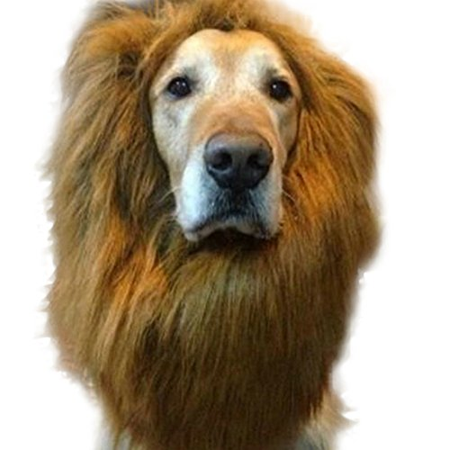 Lion Mane Costume, PanDaDa Dog Lion Wig for Dog Large Pet Holloween Christmas Festival Party Fancy Hair Dog (Golden Retriever Lion Costume)