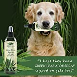 Green Leaf Naturals Organic Aloe Vera Gel Spray for Skin, Hair, Face, After Sun Care and Sunburn Relief - 99.8% Organic - 100% Pure and Natural Skin Care Moisturizer - Unscented, 8 ounces