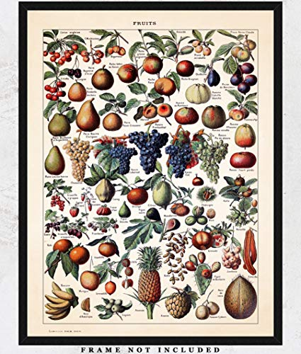Vintage Fruits Botanical Wall Art Print: Unique Room Decor for Boys, Girls, Men & Women - (11x14) Unframed Picture - Great Gift Idea