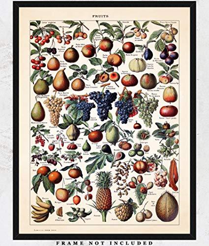 (Vintage Fruits Botanical Wall Art Print: Unique Room Decor for Boys, Girls, Men & Women - (11x14) Unframed Picture - Great Gift Idea)