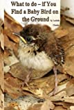What to Do- If You Find a Baby Bird on the Ground, Lucinda Choules, 1500448834