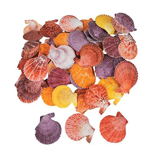Fun Express - Colored Pecten Nobilis Seashells 2 Lbs - Craft Supplies - Bulk Craft Accessories - Feathers and Shells - 1 Piece