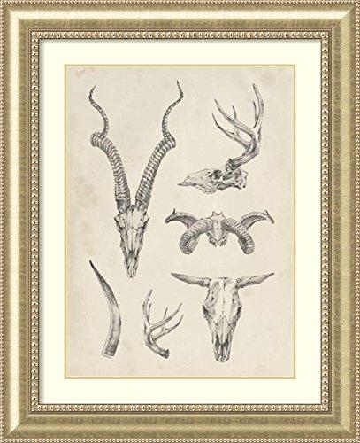 Framed Art Print 'Skull & Antler Study I' by Ethan Harper
