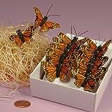 """Orange Monarch Butterflies, 1-1/2"""""""