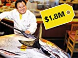 Why Bluefin Tuna Is So Expensive