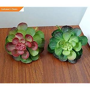 Hebel Four Colors Snow Lotus Plastic Artificial Succulents Plants Set of 2   Model ARTFCL - 535   104