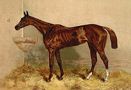 - Buyenlarge Emblem, Steeplechase Mare - Gallery Wrapped 28