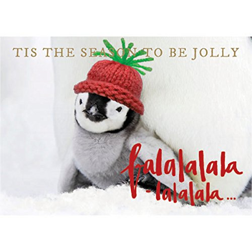 """Graphique Jolly Penguin Boxed Cards - 15 Embellished Gold Foil""""Tis The Season"""" Holiday Cards with Cute Knit-Hat Penguin, Christmas Cards Includes Matching Envelopes and Storage Box, 4.75"""" x 6.625"""""""