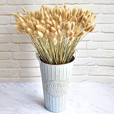 30pcs Dried Natural Flower Bouquets Lagurus Ovatus Rabbit Tail Grass Home Decor