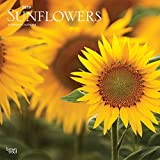 Sunflowers 2019 12 x 12 Inch Monthly Square Wall Calendar, Flower Floral Plant Outdoor Nature (Multilingual Edition)
