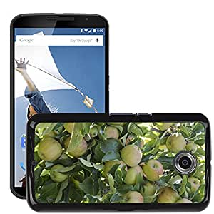 Hot Style Cell Phone PC Hard Case Cover // M00308514 Apples Tree Nature Plant Fruit // LG Google Nexus 6